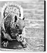 Squirrel Canvas Print by Paulina Szajek