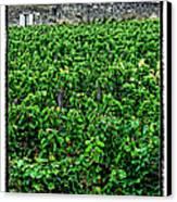 St. Emilion Winery Canvas Print