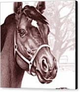 Stare Of The Stallion Canvas Print by Patricia Howitt