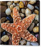 Starfish On Rocks Canvas Print