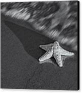 Starfish On The Beach Bw Canvas Print