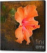 Steely Hibiscus Canvas Print by The Stone Age