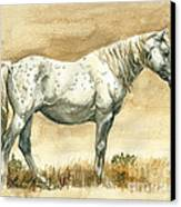 Sterling Wild Stallion Of Sand Wash Basin Canvas Print by Linda L Martin