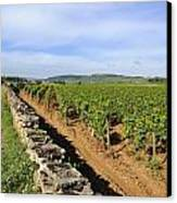 Stone Wall. Vineyard. Cote De Beaune. Burgundy. France. Europe Canvas Print