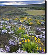 Storm Over Wildflowers Canvas Print