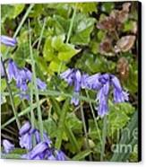 Stormy Wild Bluebell  Canvas Print by Tim Rice