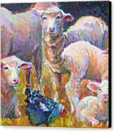 Stranger At The Well - Spring Lambs Sheep And Hen Canvas Print by Talya Johnson