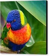 Striking Rainbow Lorakeet Canvas Print by Penny Lisowski