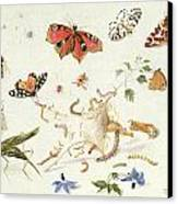 Study Of Insects And Flowers Canvas Print