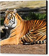 Sumatran Tiger 7d27310 Canvas Print by Wingsdomain Art and Photography