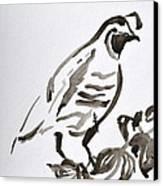Sumi-e Quail Canvas Print by Beverley Harper Tinsley