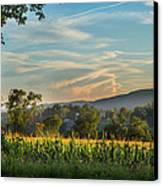 Summer Corn Canvas Print by Bill Wakeley