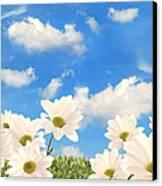 Summer Daisies Canvas Print by Amanda Elwell