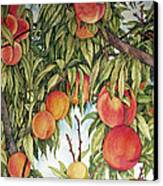 Summer Peaches Canvas Print by Helen Klebesadel