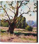 Summer Willow Canvas Print by Graham Gercken