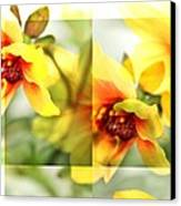 Summer Yellow Two Canvas Print by Cathie Tyler