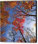 Sun In Fall Forest Canopy  Canvas Print by Elena Elisseeva