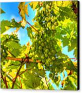 Sun Kissed Green Grapes Canvas Print by Eti Reid