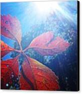 Sun Leaf Canvas Print by Candice Trimble