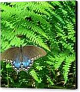Sunbathing Butterfly Canvas Print