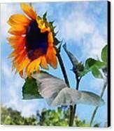 Sunflower Against The Sky Canvas Print by Susan Savad