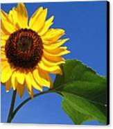 Sunflower Alone Canvas Print