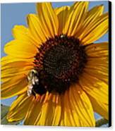 Sunflower And Bee Canvas Print by Victoria Sheldon
