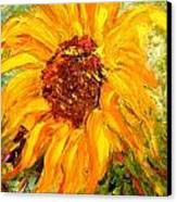 Sunflower Canvas Print by Barbara Pirkle