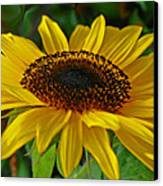 Sunflower Canvas Print by Daniele Smith