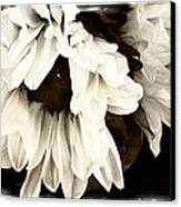 Sunflower In Black And White 1 Canvas Print by Tanya Jacobson-Smith
