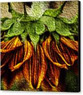 Sunflower Canvas Print by John Monteath