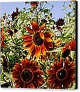 Sunflower Layers Canvas Print by Kerri Mortenson