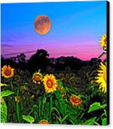 Sunflower Patch And Moon  Canvas Print