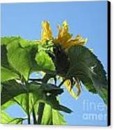 Sunflower Sky Canvas Print by Elizabeth Stedman