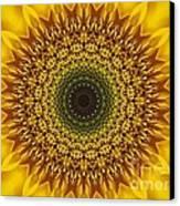 Sunflower Sunburst Canvas Print by Annette Allman
