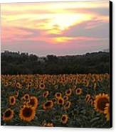 Sunflower Sunset Canvas Print by Dawn Vagts