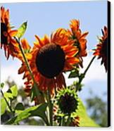 Sunflower Symphony Canvas Print by Karen Wiles