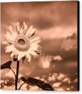 Sunflowers Canvas Print by Bob Orsillo