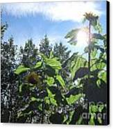 Sunflowers In Sunshine Canvas Print by Elizabeth Stedman
