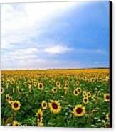 Sunflowers Canvas Print by Thomas Leon