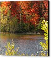 Sunlit Autumn Canvas Print