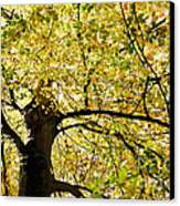Sunlit Autumn Tree Canvas Print by Natalie Kinnear