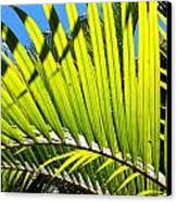 Sunlit Palm Tree  Canvas Print by Prashant Shah