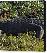Sunny Alligator Canvas Print by Joshua House