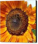 Sunny Sunflower Canvas Print by Annette Allman
