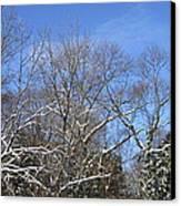 Sunny Winter Sky Canvas Print