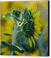 Sunny With Texture Canvas Print by Rima Biswas