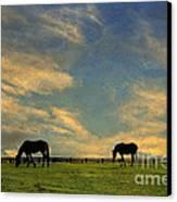Sunrise Graze Canvas Print by Darren Fisher
