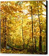 Sunrise In The Forest Canvas Print by James Hammen