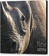 Sunrise Rhino Canvas Print